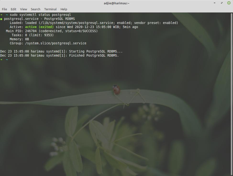 Verify PostgreSQL Installation
